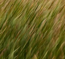 Green Nature Abstract by MaluC