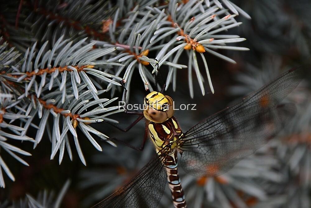 Dragonfly II by RosiLorz