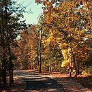 Autumn Trail by Rick  Friedle