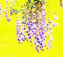 Fragrant Wisteria by Deborah Crew-Johnson