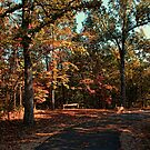 Autumn Trail Bench by Rick  Friedle