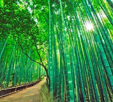 Bamboo forest at Sagano - Arashiyama (Kyoto) by Yves Rubin