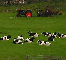 Lazy Cows by Kat Simmons