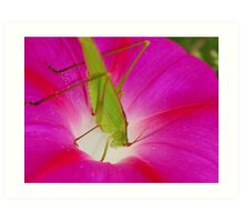 cricket with flower Art Print
