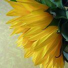 Sunny Light by JanG