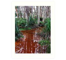 Lachlan Swamp - Centennial Park Art Print