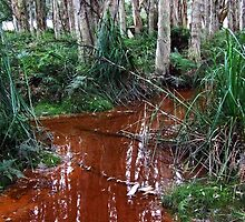 Lachlan Swamp - Centennial Park by Paul Todd