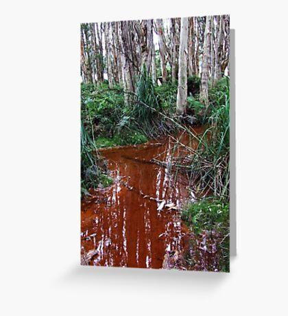 Lachlan Swamp - Centennial Park Greeting Card