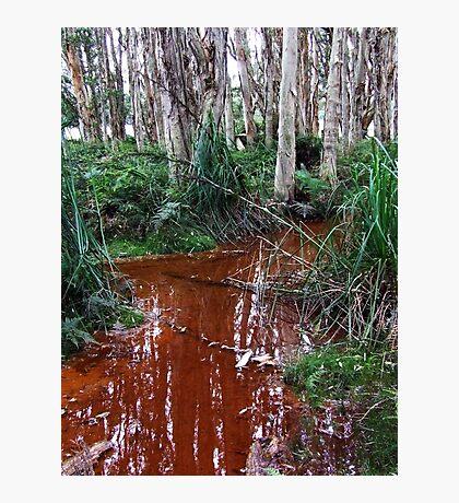 Lachlan Swamp - Centennial Park Photographic Print