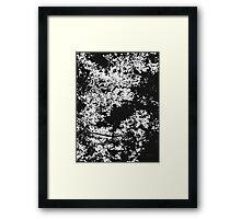 Series: Leaves 6 Framed Print