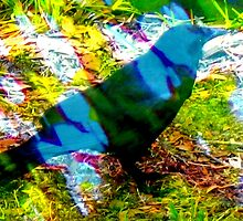 Blackbird in dappled light by ♥⊱ B. Randi Bailey