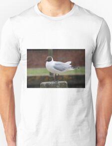 Black Headed Gull, Rye T-Shirt