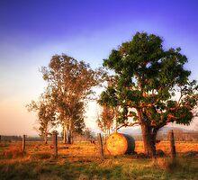 Bundaberg in Living Colour by Luke Griffin