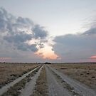 Tracks Across the Kalahari, Botswana, Africa  by Adrian Paul