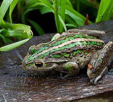 Motorbike Frog by pennyswork