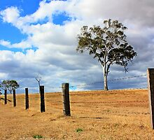 Fenced in. by Zephyrus