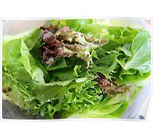 Salad Greens Poster