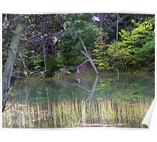 Reflections in a Tidal Marsh Poster