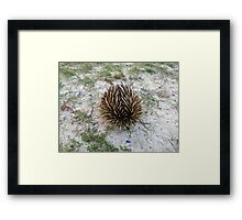 Spikey Rescue Framed Print