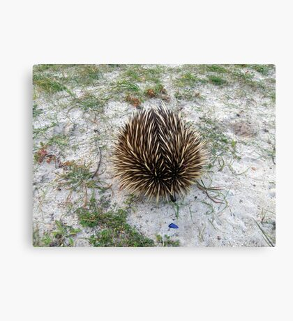 Spikey Rescue Canvas Print