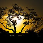 Tree of life by Iain Pallot