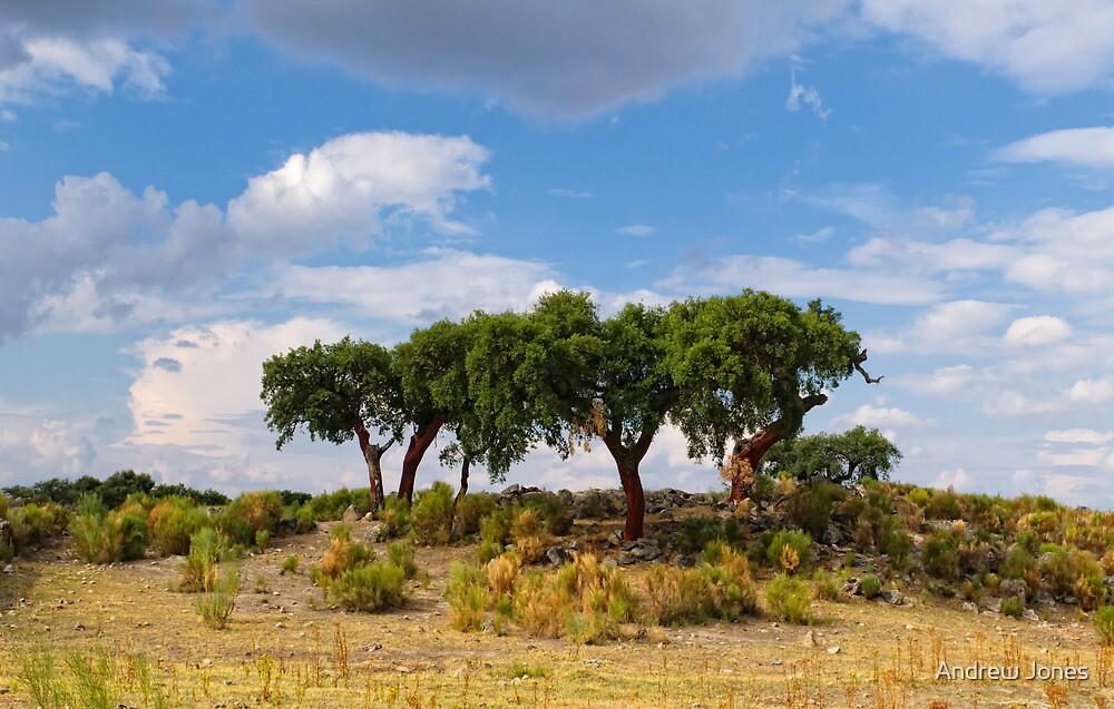 Cork tree grove, Santo Antonio das Areias, Marvão, Portugal by Andrew Jones