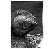 A Swim & A Bite to Eat Poster