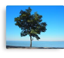 Lonely acacia tree with green leaves on the coast of the sea Canvas Print
