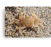 Creepy crab Metal Print