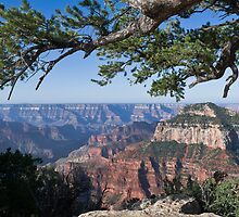 Grand Canyon from Bright Angel trail by Gary Eason + Flight Artworks