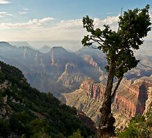 Stunted pine, North Rim, Grand Canyon by Gary Eason