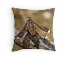 White-tipped Long-wings Beefly - Comptosia rubrifera Throw Pillow