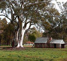 Bark Slab Huts under the Red gum by Simon Bannatyne