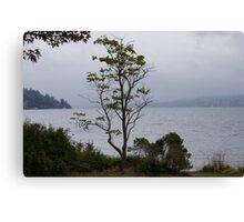 Lake Washington Canvas Print