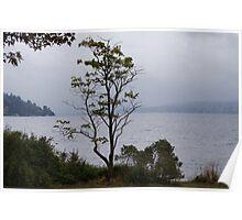 Lake Washington Poster