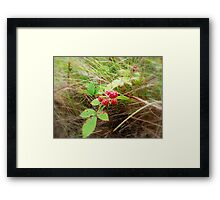 Juicy Red Framed Print