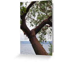 Trees Along Lake Washington Greeting Card