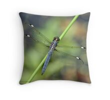 Spangled Skimmer... Throw Pillow