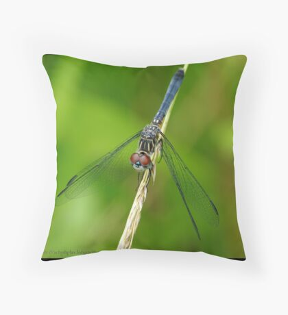 Blue Dasher... Throw Pillow