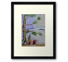 Old Cypress of Many Colors Framed Print