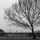 Vineyard with Tree by pennyswork