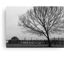 Vineyard with Tree Canvas Print