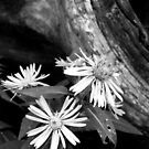 Asters and Driftwood by jrier