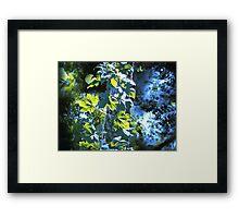 Hojas del Verano Framed Print