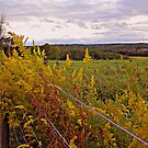 Greener on the other side of the fence? by Tammy Devoll