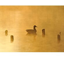 Quack Photographic Print