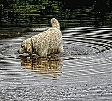I just had to have a paddle ~ dog by Karen  Betts