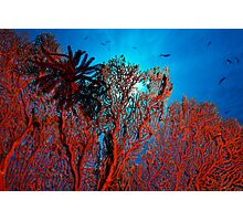 The Coral Photographic Print