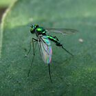 Green Metal Fly by Amrita Neelakantan