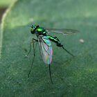 Green Metal Fly by Amrita Neelakantan
